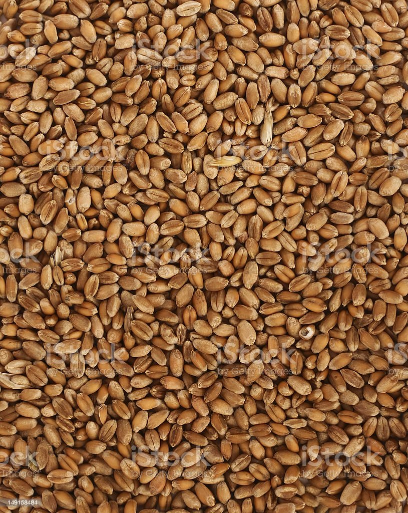 millet wheat royalty-free stock photo