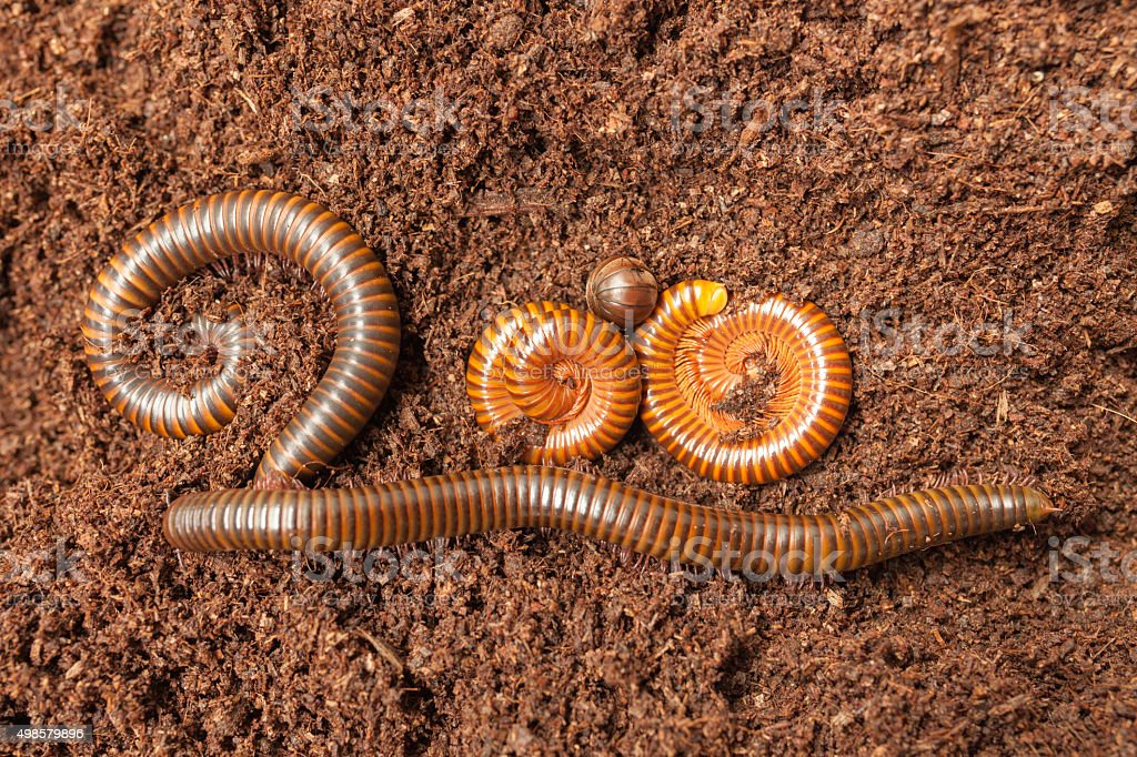 Millipede insect composition of two hundred symbol stock photo