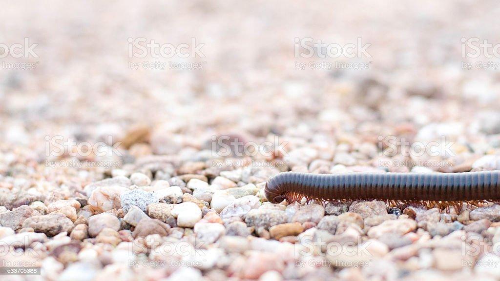 Millipede on sand stock photo