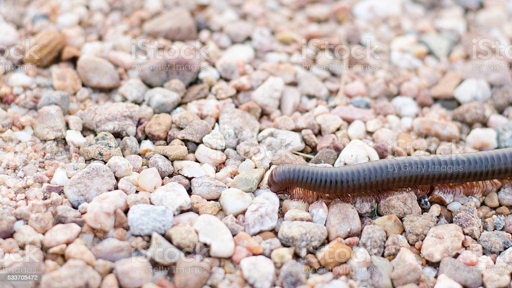 Milpiés en arena foto de stock libre de derechos
