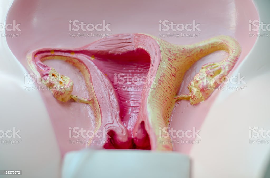mimetic female reproductive organ stock photo