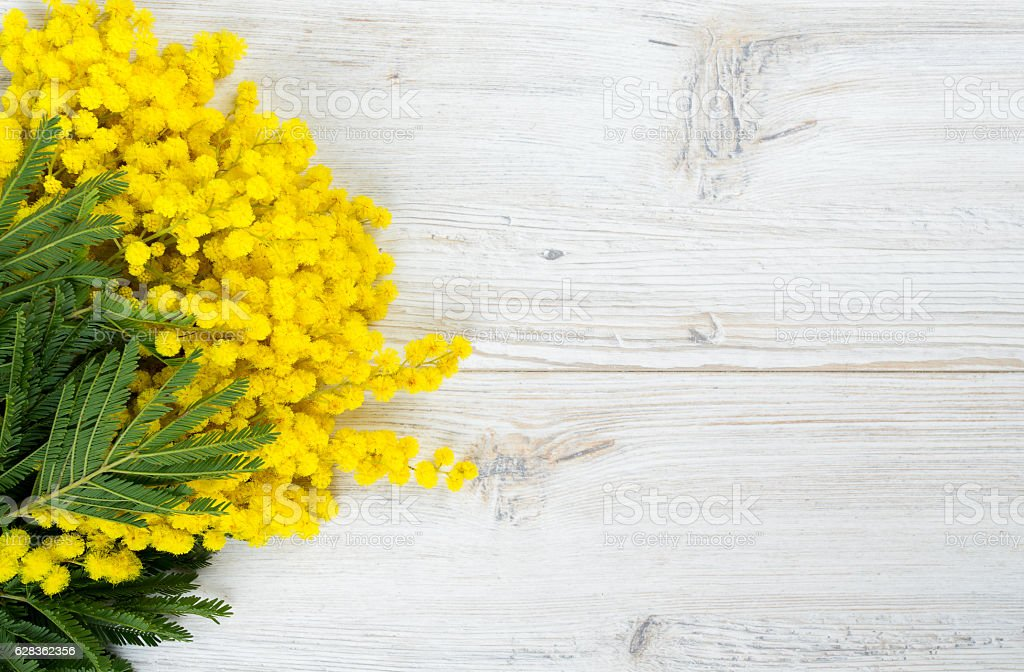 mimosa on white wooden background stock photo