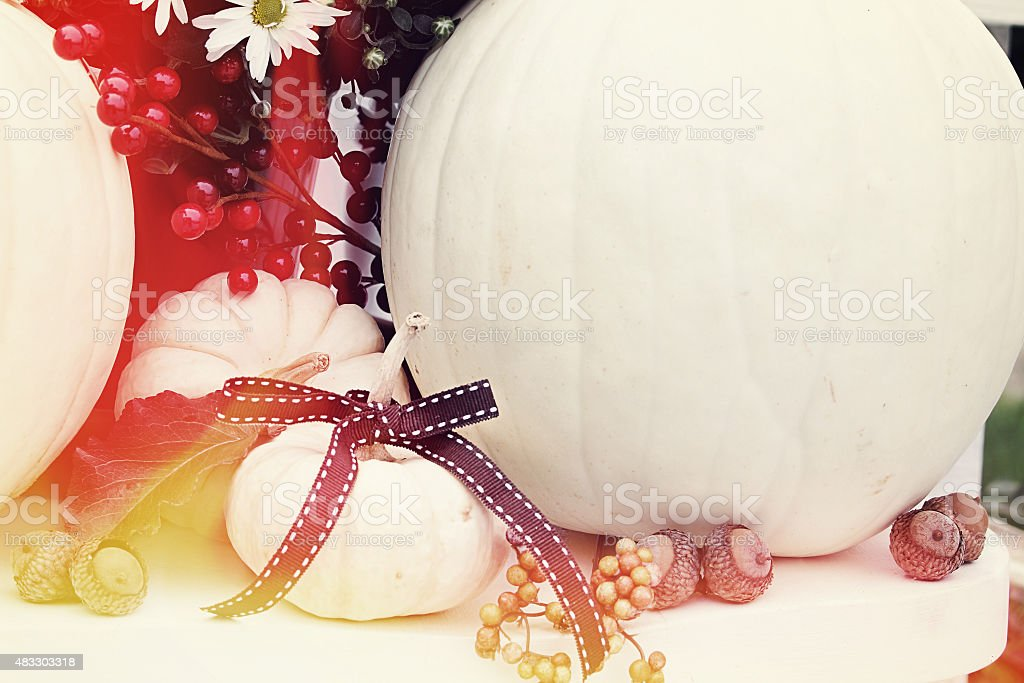 Minature White Pumpkins stock photo