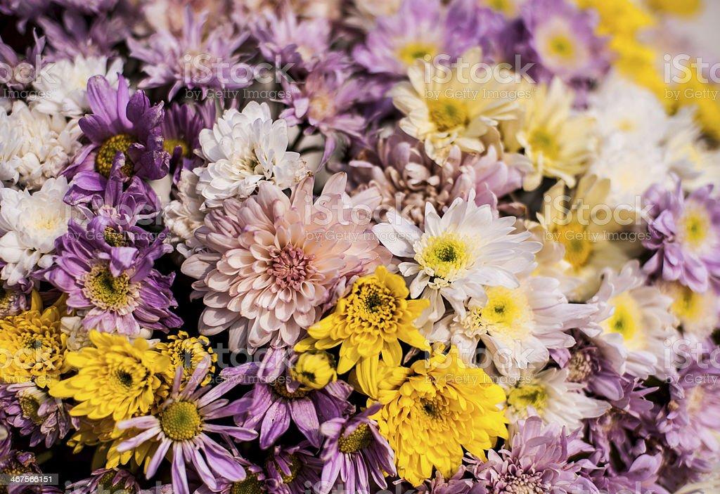 mini flower in market royalty-free stock photo
