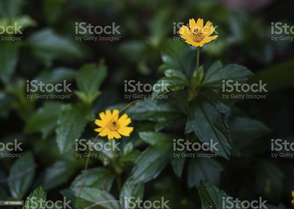 mini flower royalty-free stock photo