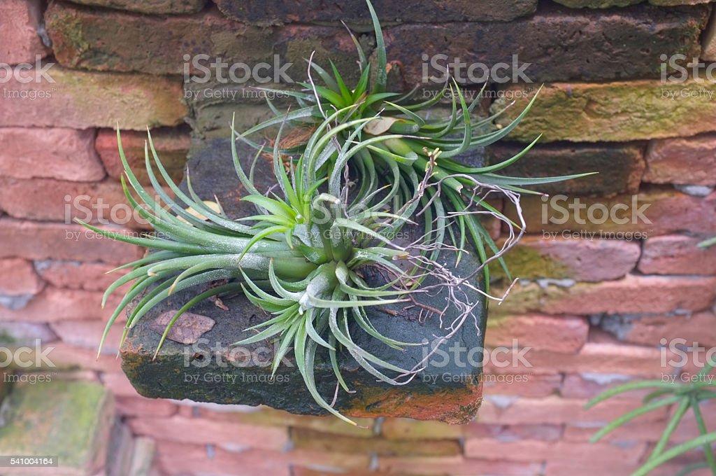 Mini green bromeliad stock photo