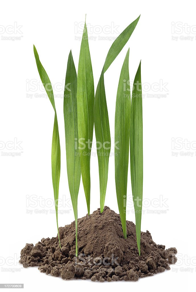 Mini Lawn stock photo