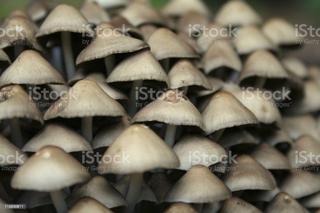 mini mustrooms stock photo