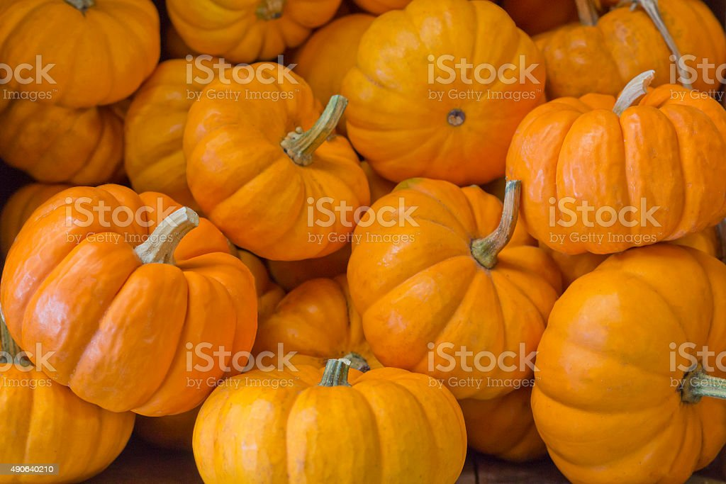 Mini Pumpkin stock photo