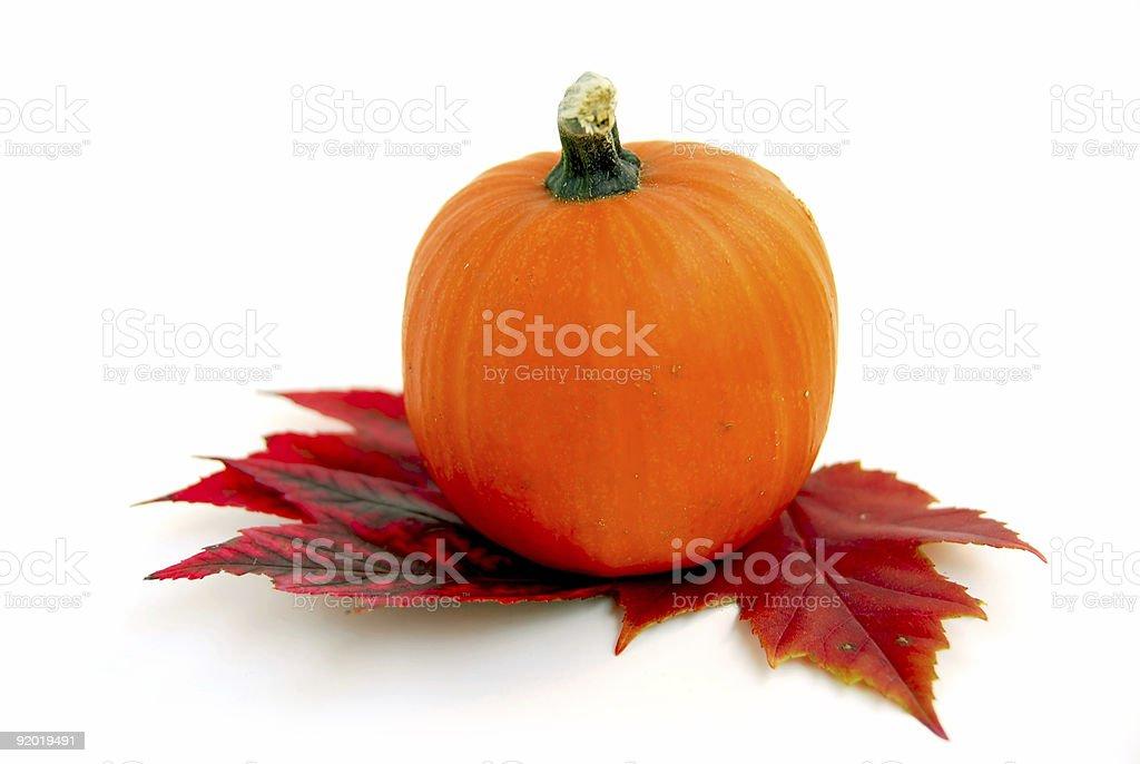 Mini pumpkin royalty-free stock photo