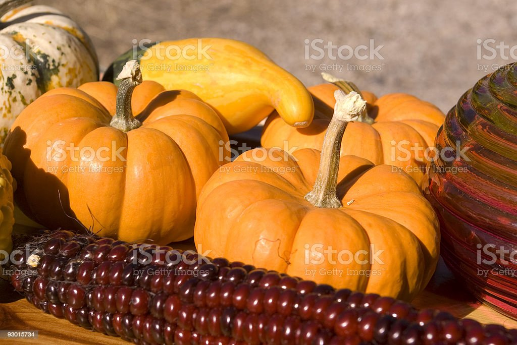 mini pumpkins and indian corn stock photo