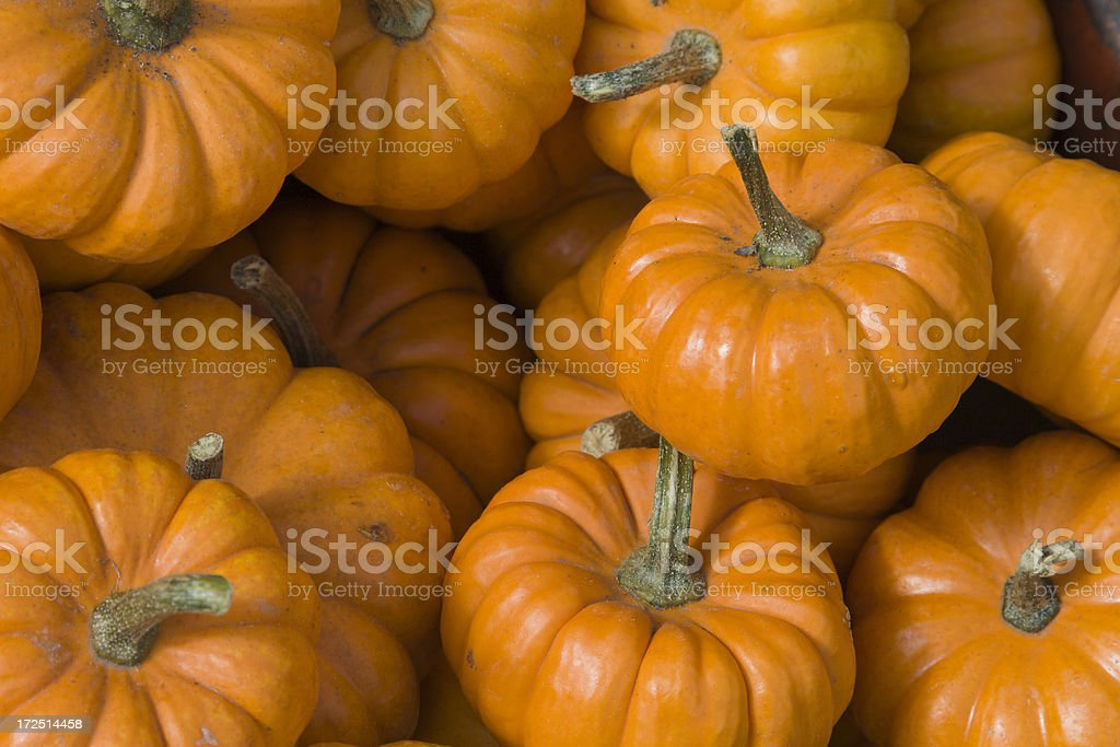 Mini Pumpkins royalty-free stock photo
