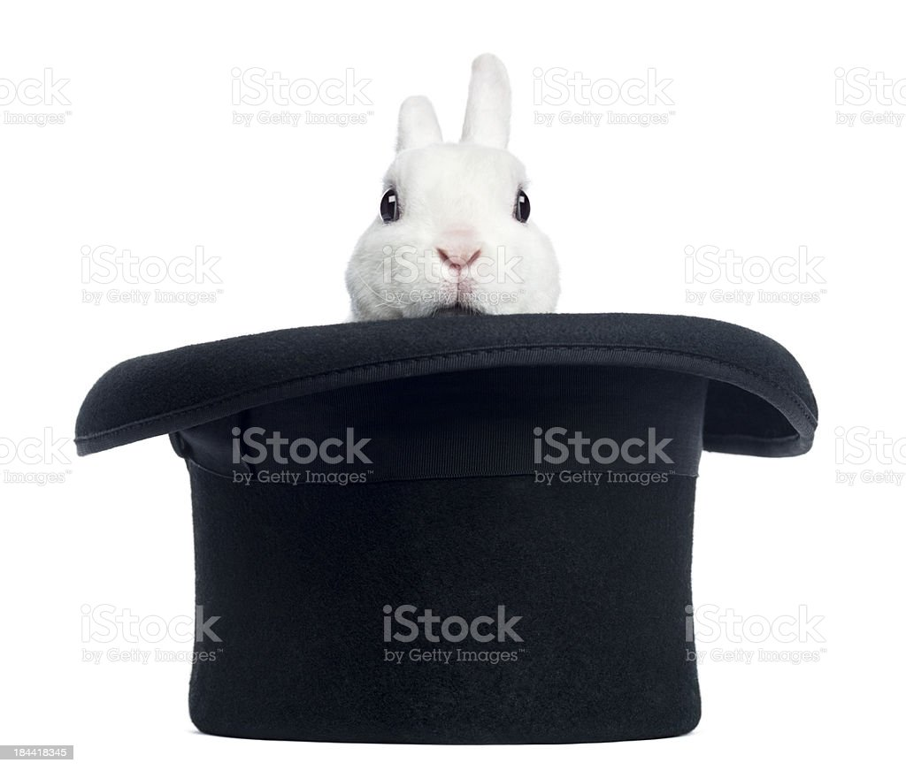 Mini rex rabbit appearing from a top hat, isolated stock photo