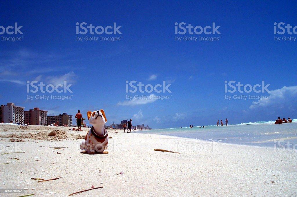 Mini Rockie on South Beach stock photo