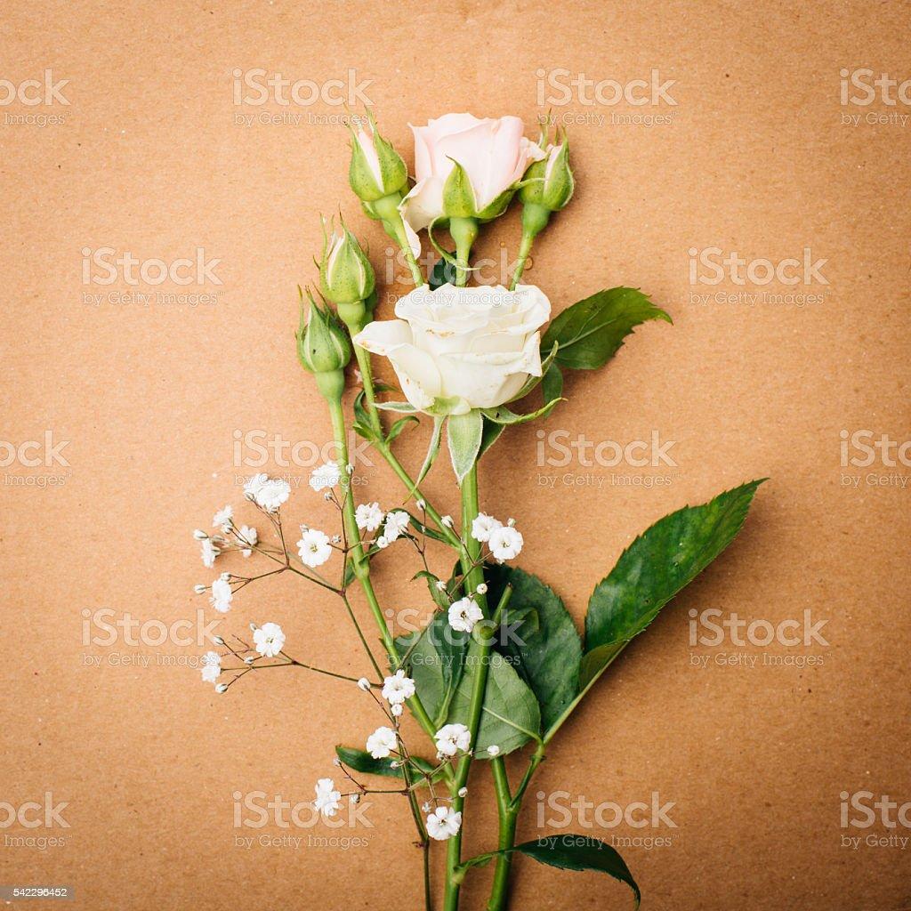 mini rose stock photo