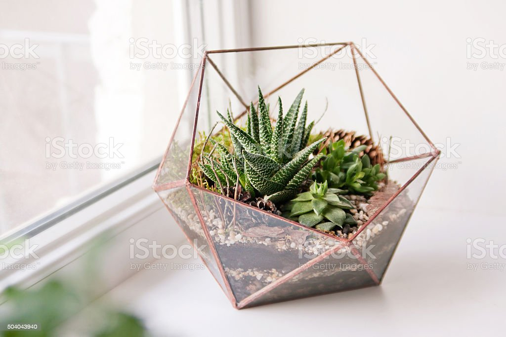 mini succulent garden in glass terrarium stock photo