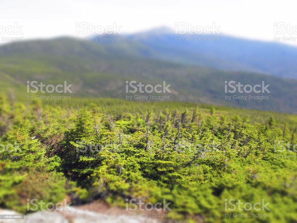 Miniature Alpine Zone, White Mountains (tilt shift) stock photo