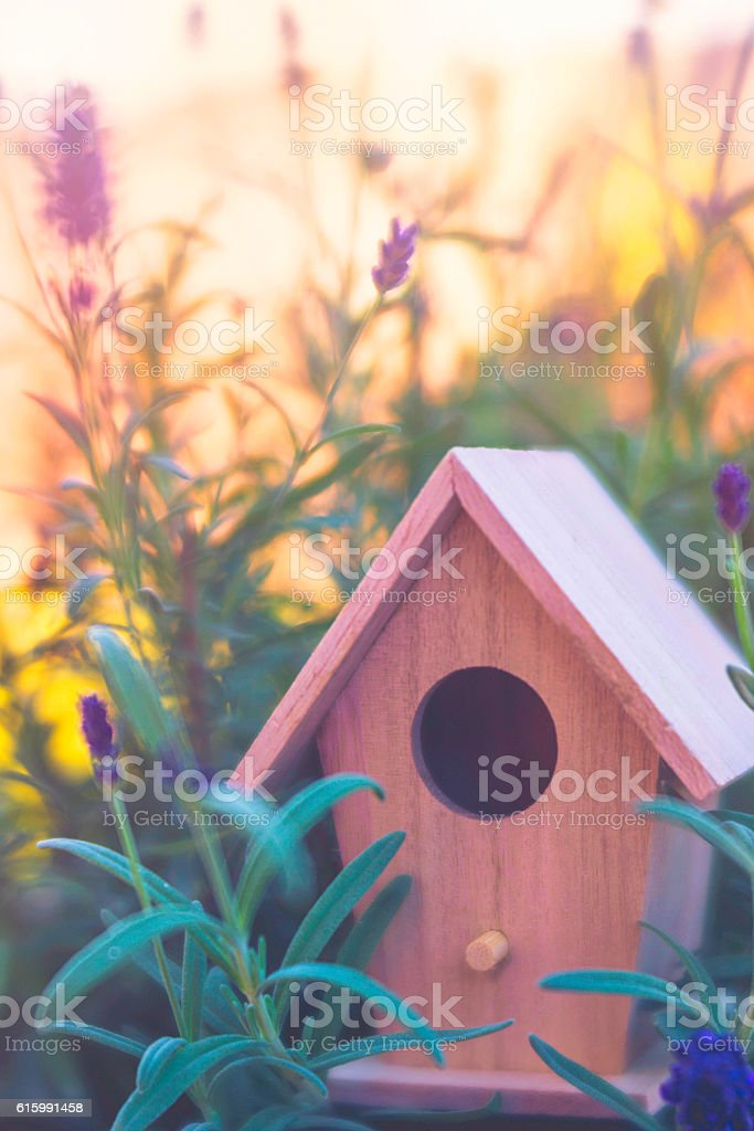 Miniature birdhouse decoration sitting amidst lavender flowers and leaves stock photo