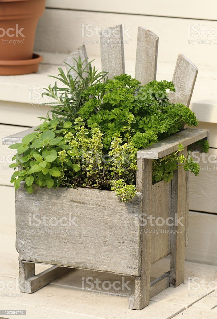 Miniature herb garden planted in a rustic wooden container royalty-free stock photo