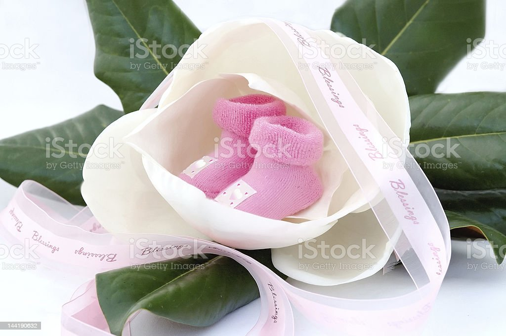 Miniature pink newborn girl socks inside fresh magnolia flower royalty-free stock photo