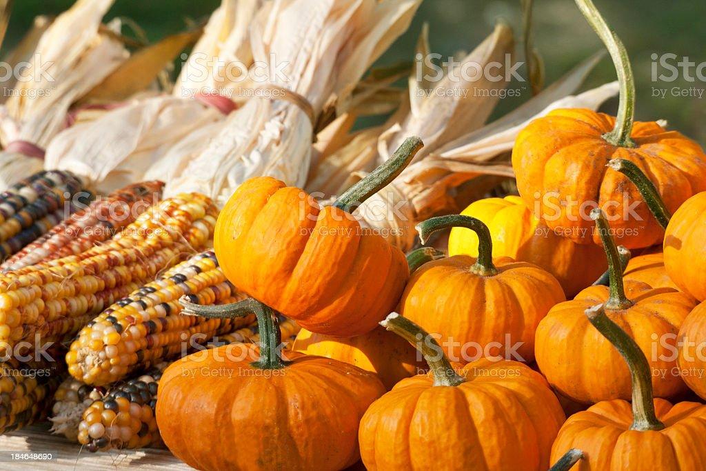 Miniature Pumpkins and Indian Corn stock photo