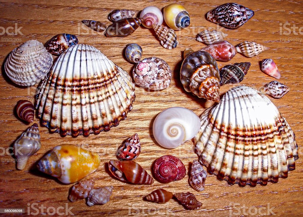 Miniature seashells stock photo