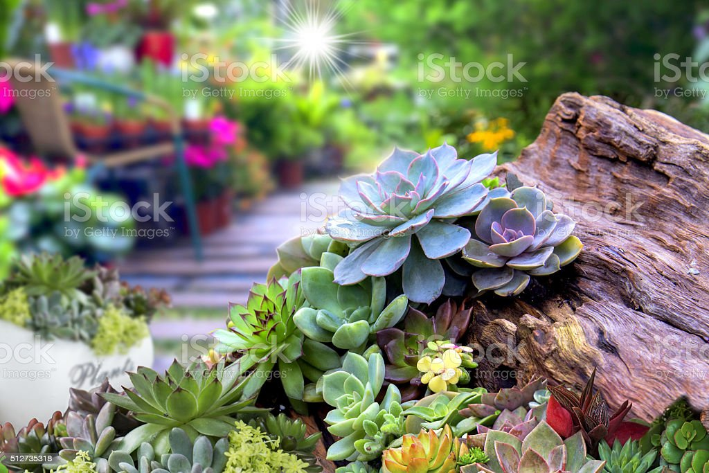 Miniature succulent stock photo