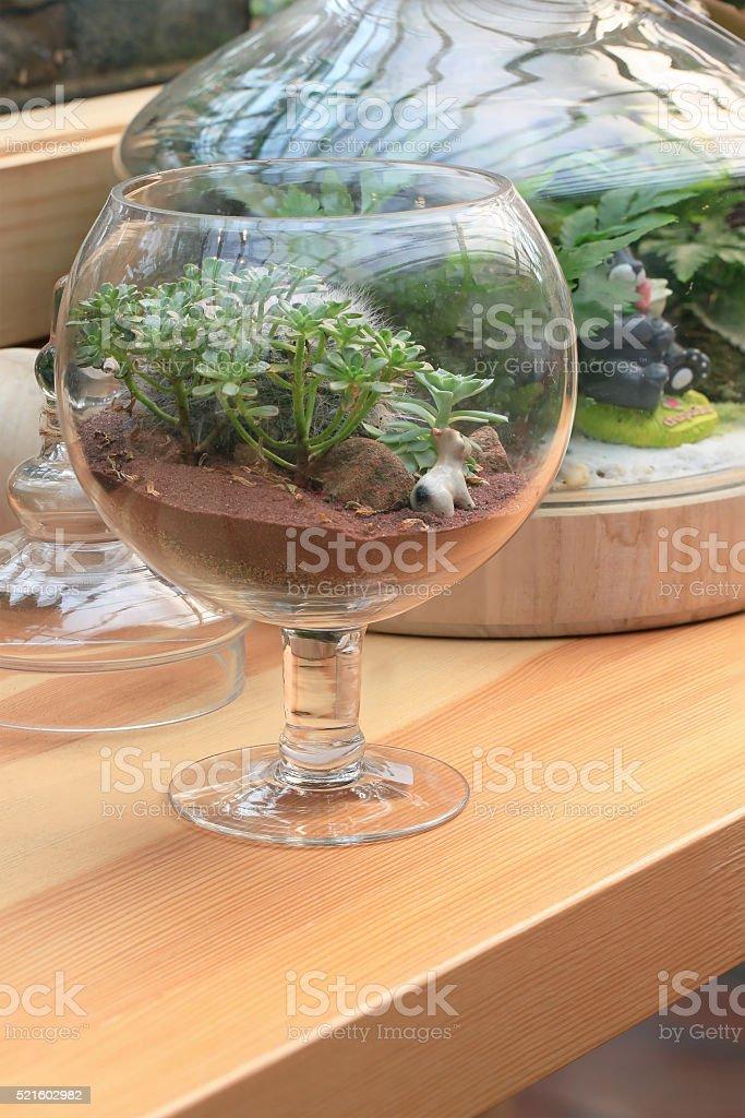 Miniature succulent plants in glass. stock photo