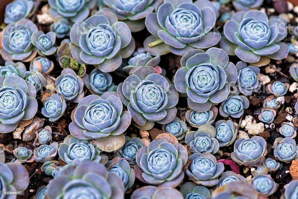 Miniature succulent plants stock photo