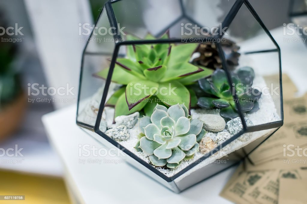 Miniature succulent plants stock photo