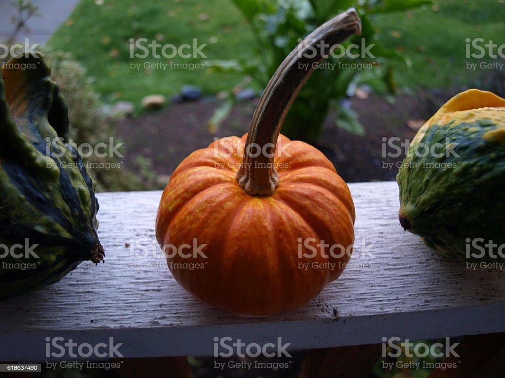 Miniature sugar pumpkin between ornamental gourds stock photo