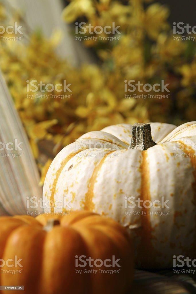 Miniature White Pumpkin royalty-free stock photo