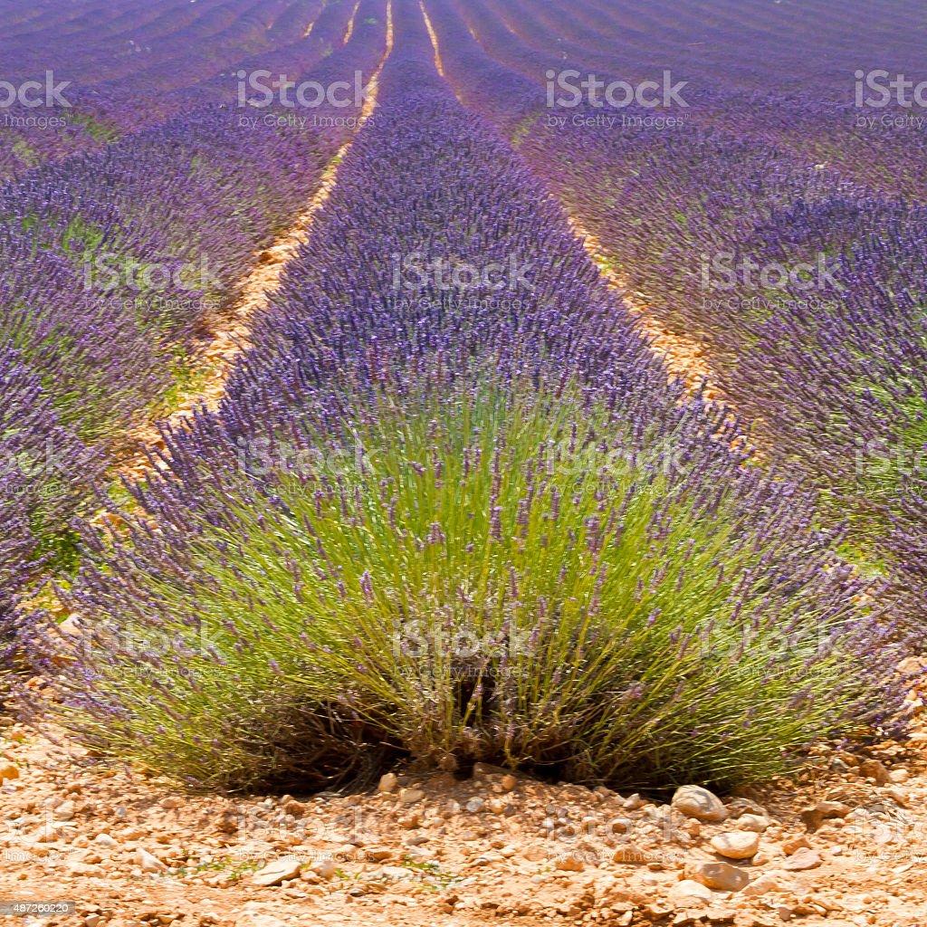 Minimal Provence stock photo