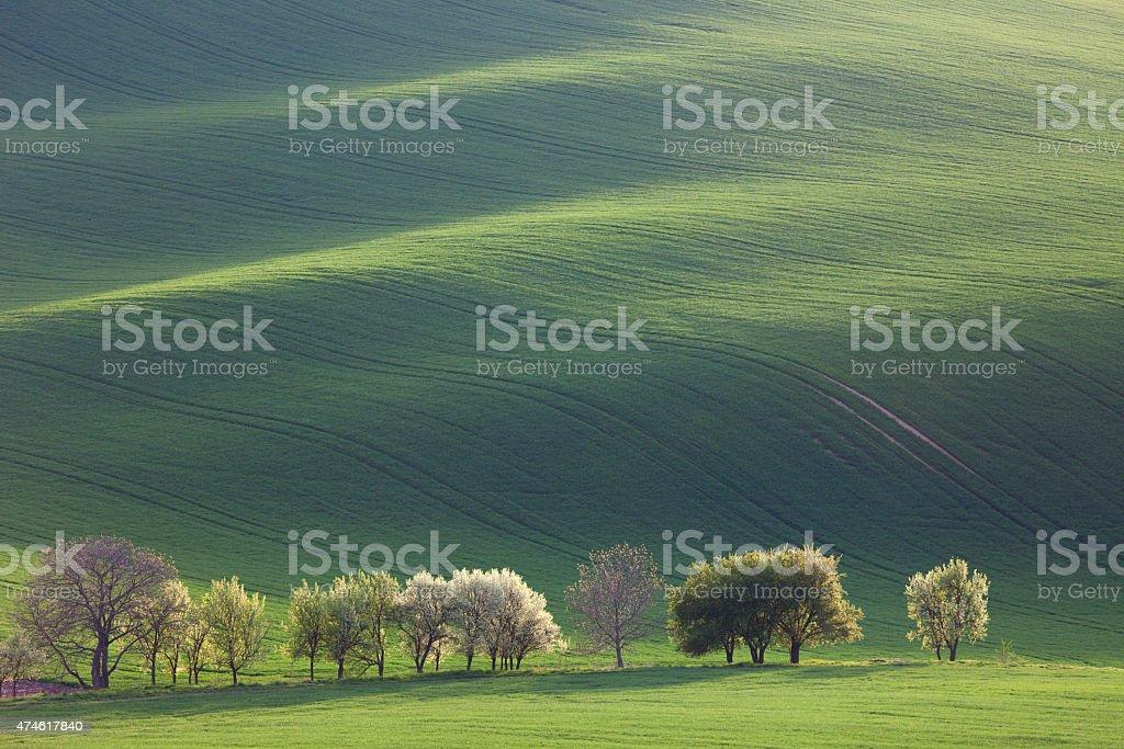 Minimalism Amazing Landscape for seasonal background or wallpape stock photo