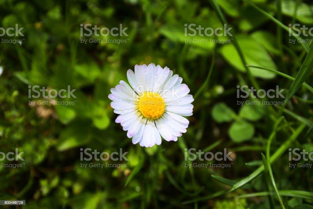 Minimalist stock photo