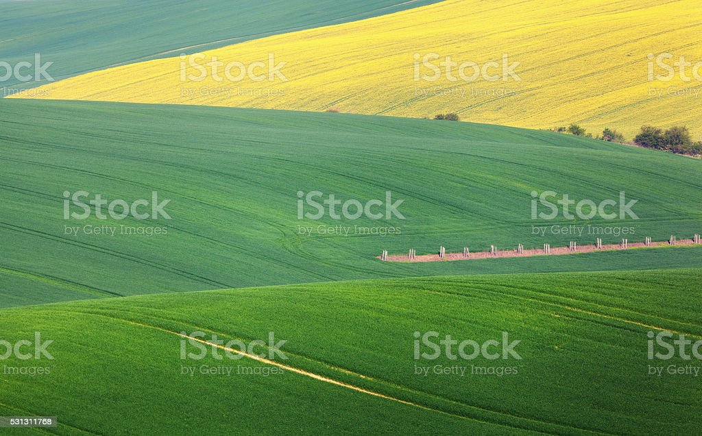 Minimalistic landscape with green fields, rolling hills at sunrise stock photo