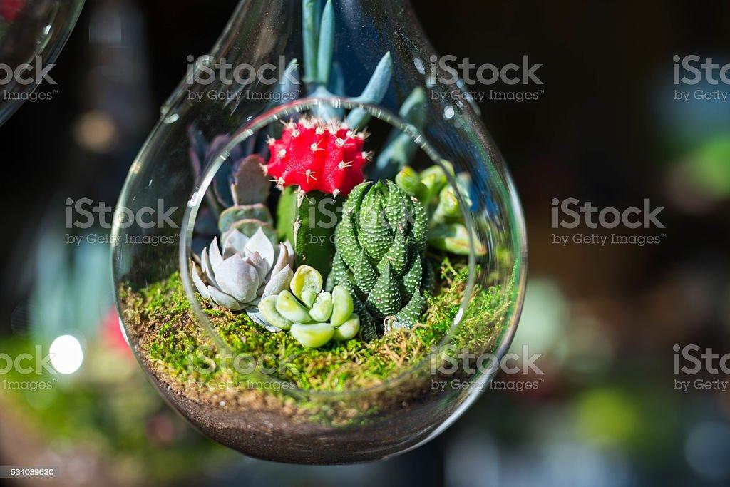 Mini-succulent and cactus in glass terrarium. stock photo