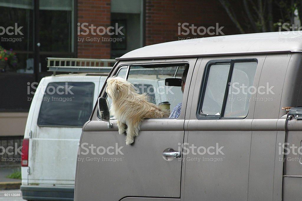 Minivan and Dog stock photo