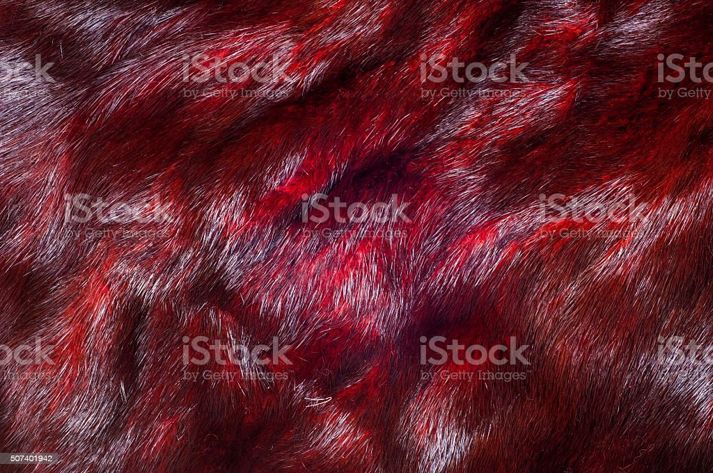Mink fur animal cherry blossoms stock photo