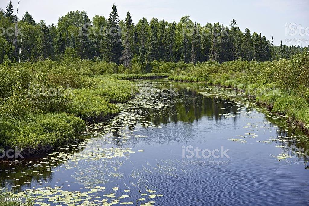 Minnesota Wilderness royalty-free stock photo