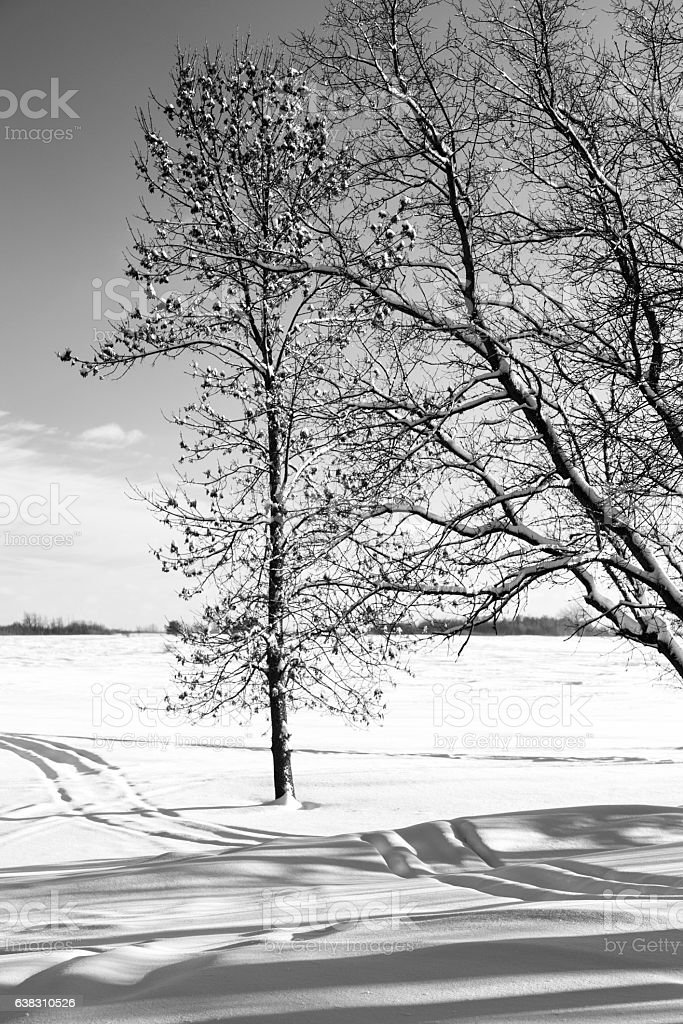 Minnesota Winter - Trees and Fresh Snow stock photo