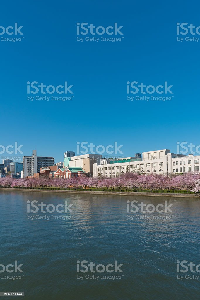 Mint and cherry blossoms stock photo