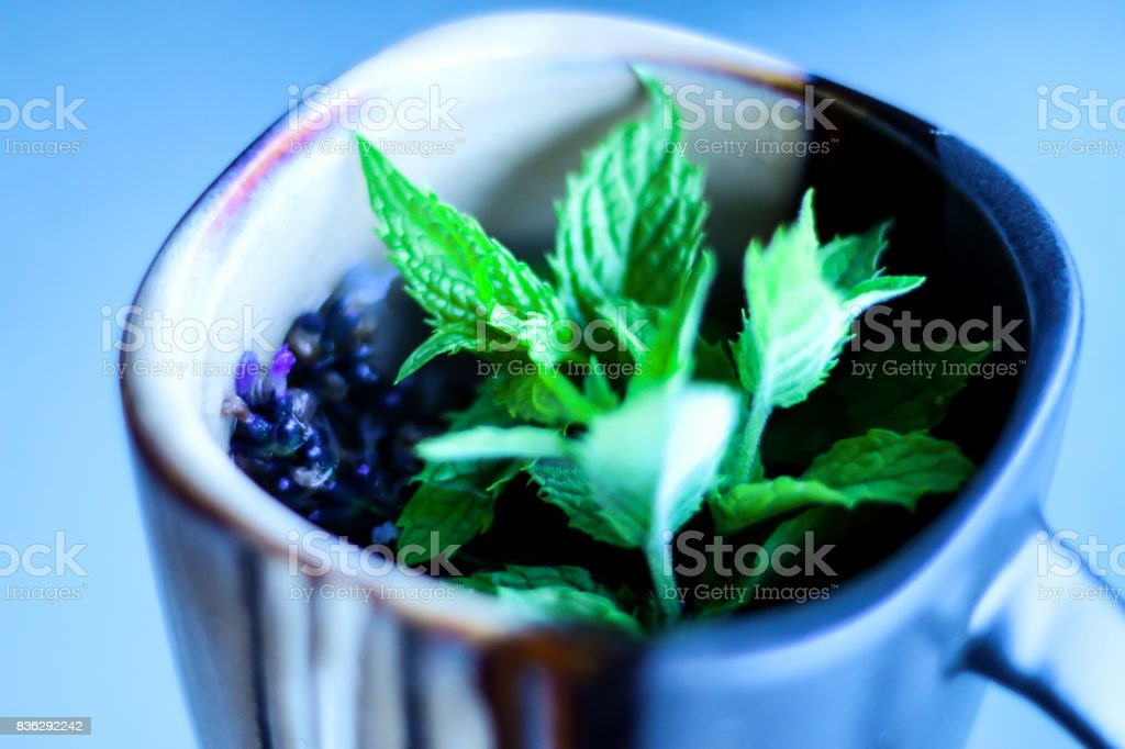 Mint and Lavender Tea stock photo