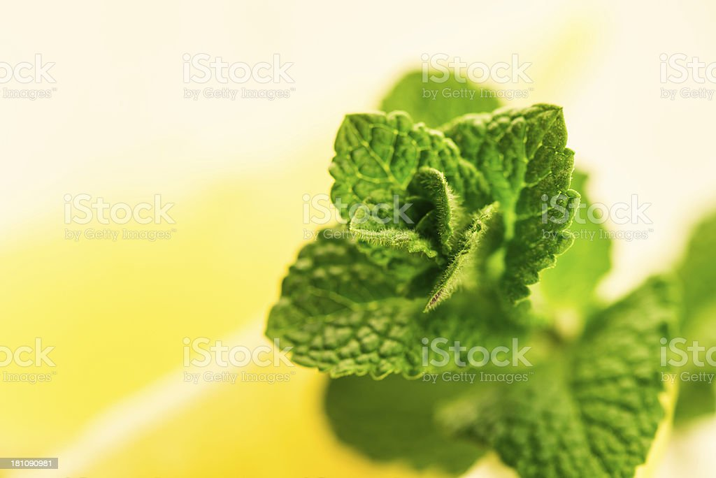 Mint and Lemon Slices stock photo