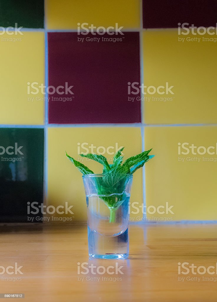 mint in a glass on a wooden table stock photo