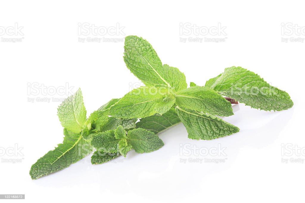 Mint isolated royalty-free stock photo