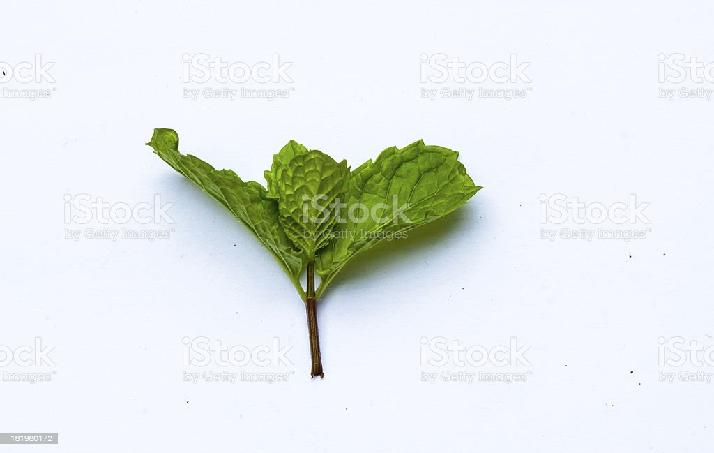 Mint leaf close up on a white background stock photo