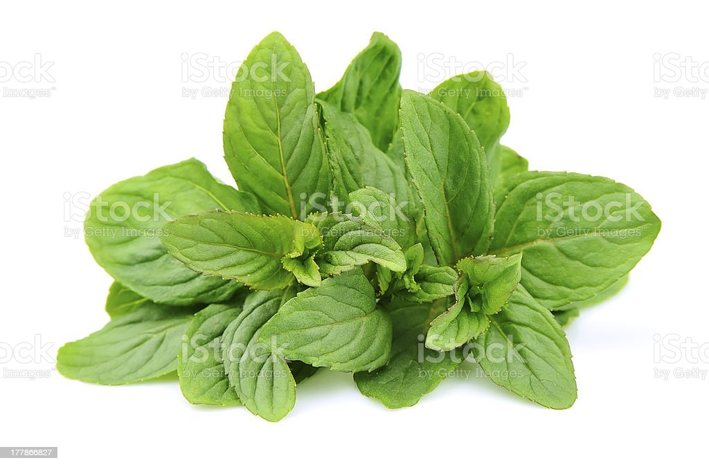 Mint leaf close up royalty-free stock photo
