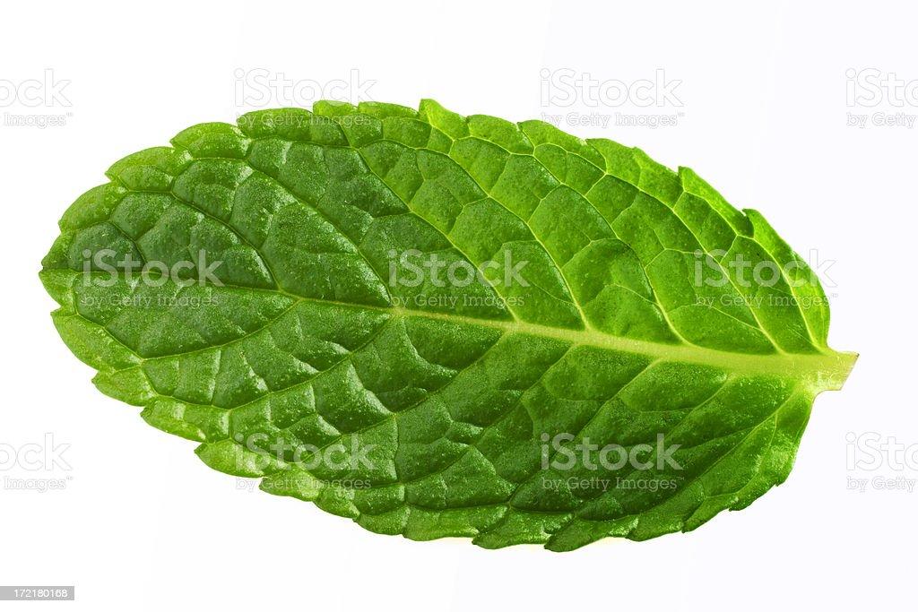 Mint Leaf Isolated stock photo