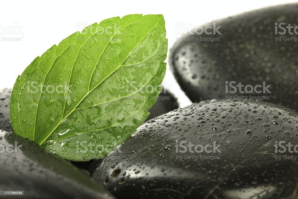 Mint Leaf with Lava Stones royalty-free stock photo